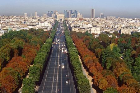 Champs Elysees from up above autumn trees